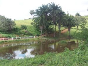 caminho ecologico
