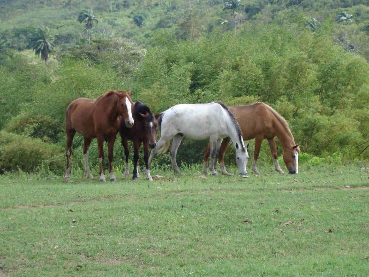 cavalos2