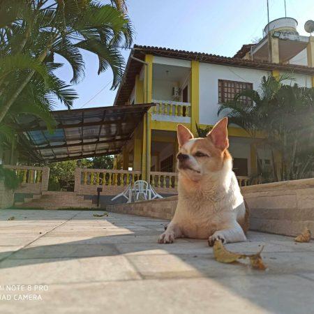 Cachorro Hotel Fazenda Guimaraes - Amelia Rodrigues BA